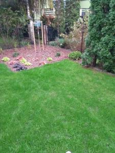 mały ogród przydomowy w swarzędzu 1