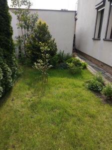 mały ogród przydomowy w swarzędzu 6